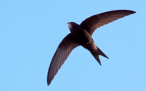 Mitos Di Balik Masuknya Burung Ke Dalam Rumah Primbon Jawa Kuno