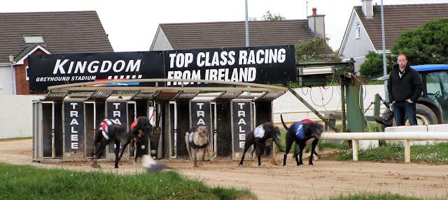 vintikoirakisat, greyhound race