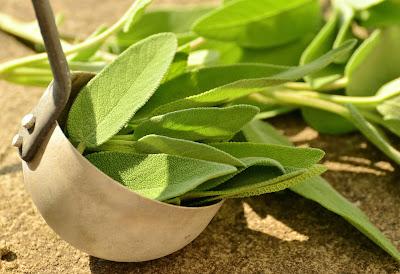 gesunder und leckerer Salbei mit drei Verwendungsmöglichkeiten, drei Rezepte