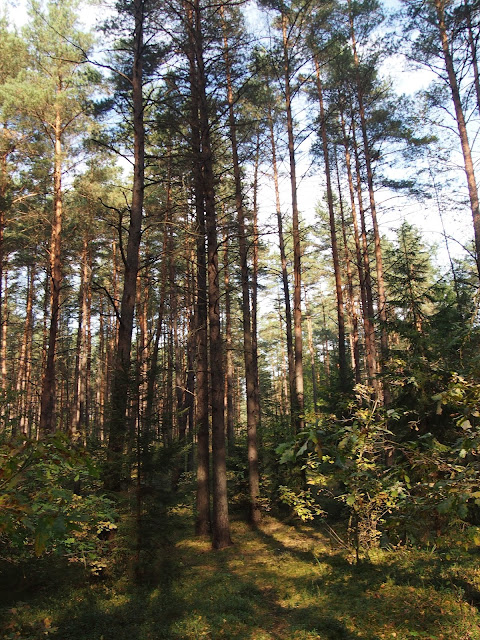 Lithuanian forests