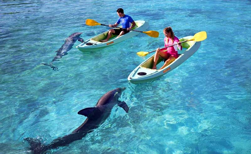 Kayaking Alongside Dolphins