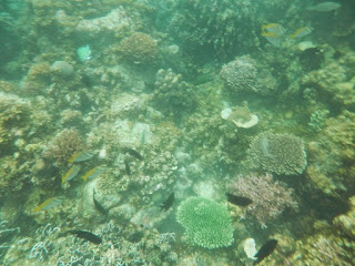 snorkeling filippine