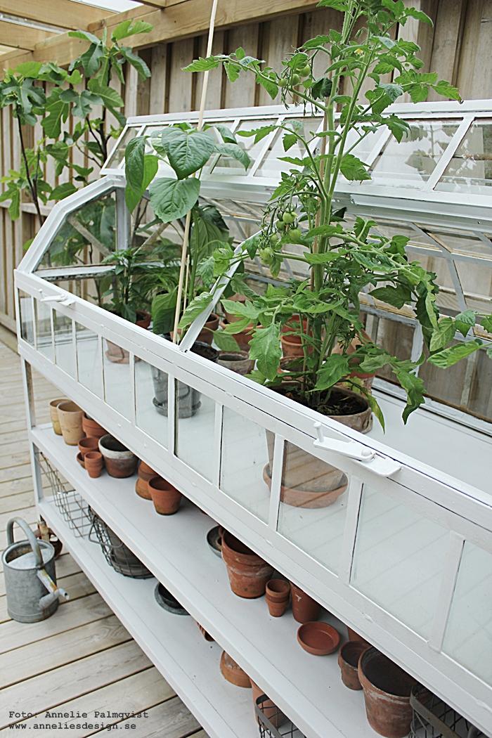 växthus, miniväxthus, green house, industri, industristil, industriell, industriellt, industriella, uteplats, uteplatser, trädäck, trädäcket, altan, altaner, altanen, patio, trädgård, tomat, tomater, plantor, planta, trädgården, trädgårdar, garden,