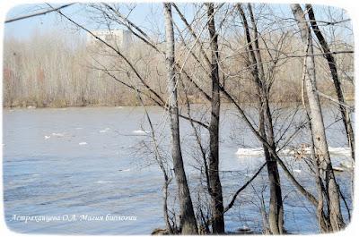 река ледоход весна деревья