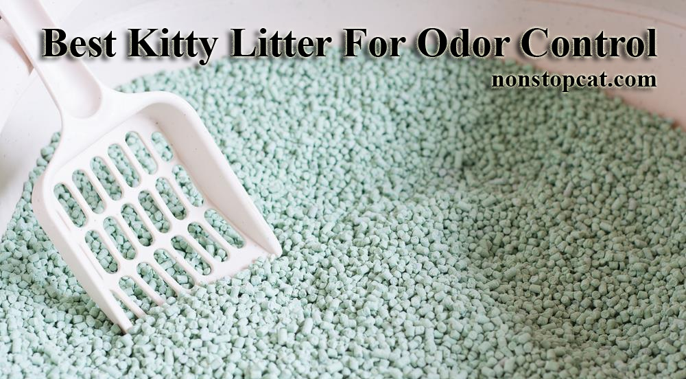Best Kitty Litter For Odor Control