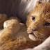 """Não estamos sabendo lidar com o trailer espetacular de """"O Rei Leão"""""""