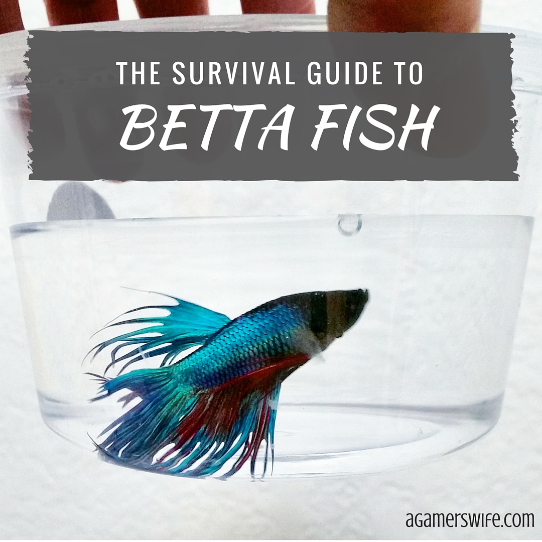 A gamer 39 s wife the survival guide to betta fish for Betta fish care guide