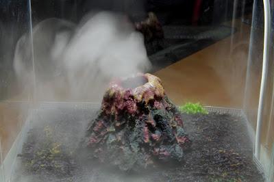 xaxim, mech i wulkan w terrarium