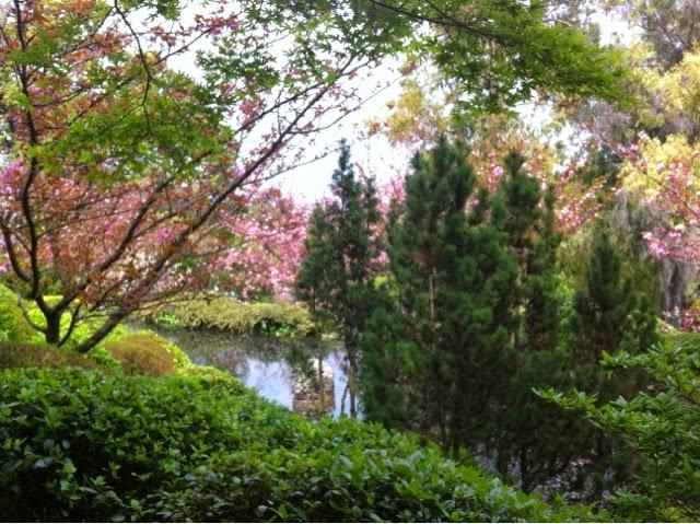 Kasvitieteellinen puutarha roomassa.