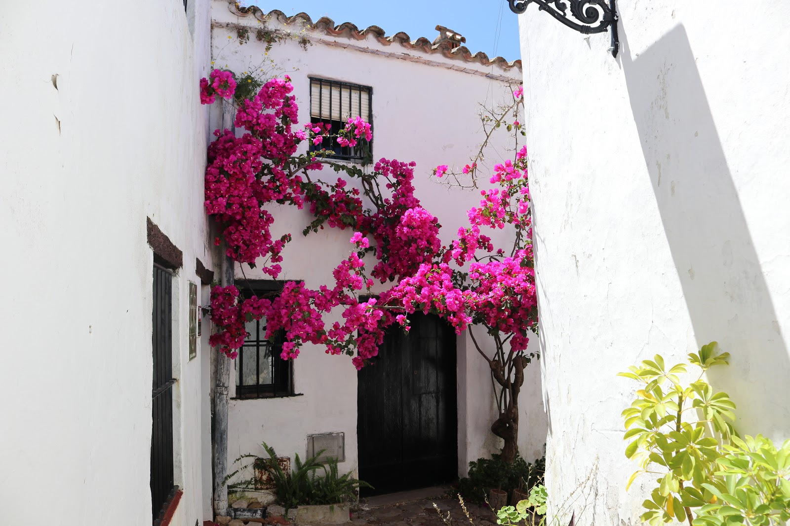 Pink flowers against white walls of Castillo de Castellar town