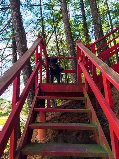 red wooden stairs with black dog at landing