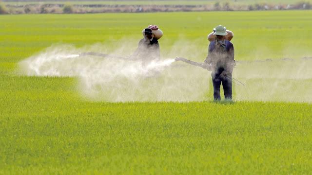 8 Gejala Keracunan Pestisida yang Perlu Diketahui
