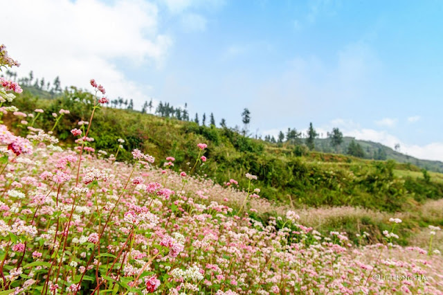 Should travel to Ha Giang in month of the year? 5