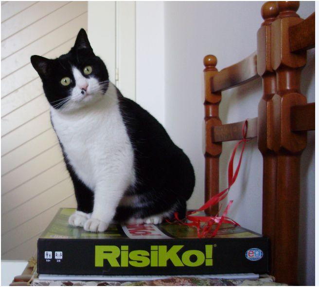 Rumore di fusa Giochi per il gatto in casa attivit e