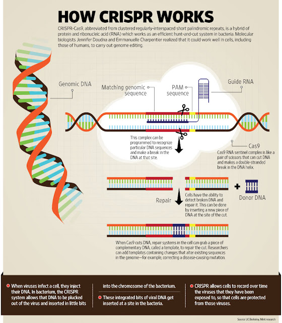 CRISPR Cas 9 Infographic - source: UC Berkeley