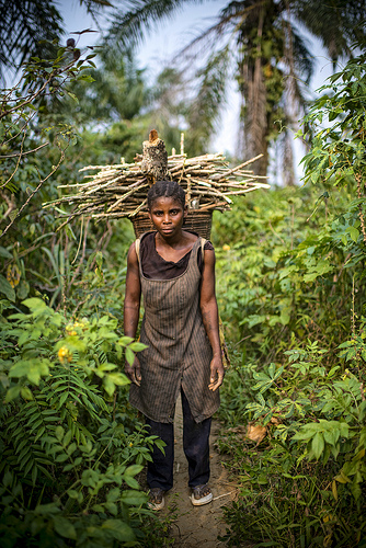 Firewood collection by women in Lukolela, Democratic Republic of Congo.