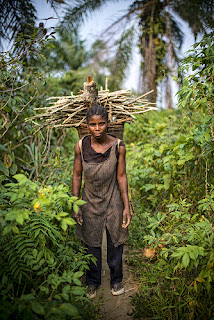 Firewood collection by women in Lukolela, Democratic Republic of Congo.