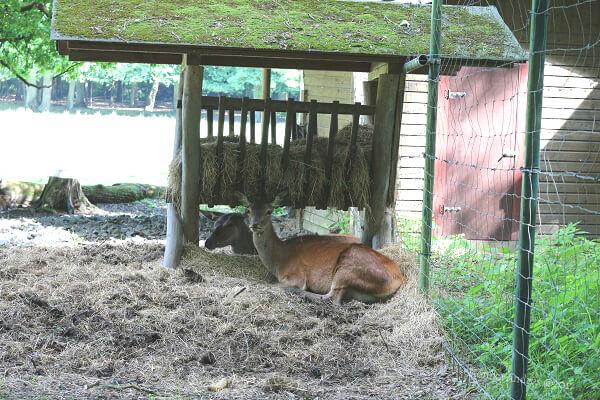 Rettung vor der Hitze im Rotwildgehege / eigene kleine Welt