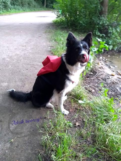 jak zrobić plecak dla psa instrukcje