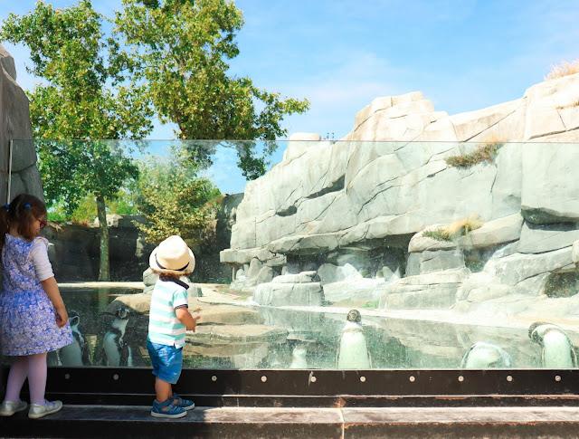 manchots du zoo de vincennes