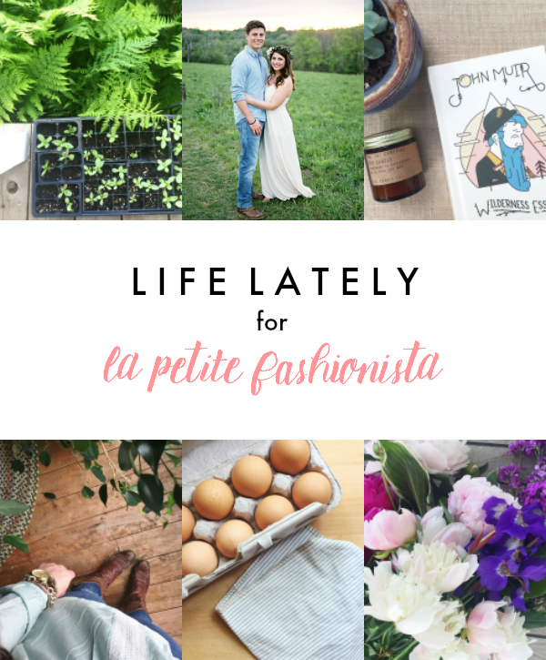 Life Lately for La Petite Fashionista