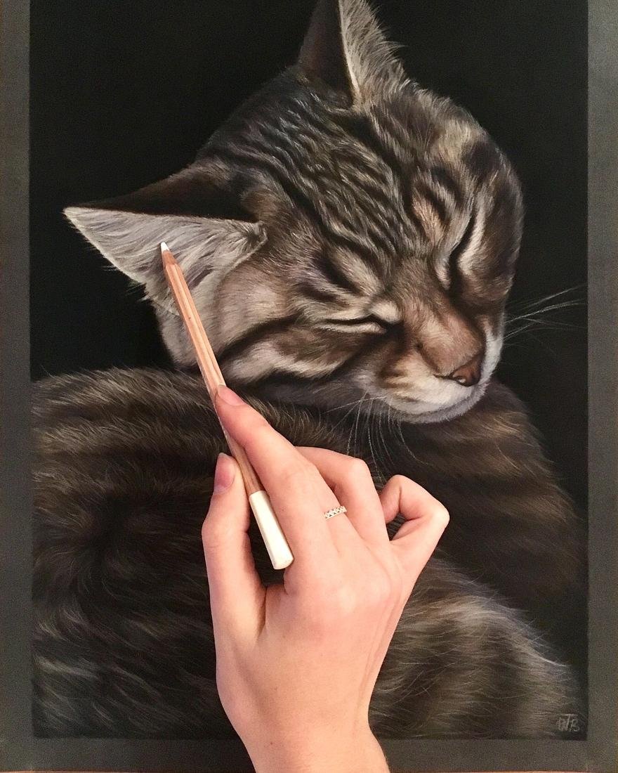 07-Sweet-Dreams-Cat-Tatjana-Bril-Domestic-and-Wild-Animal-Drawings-www-designstack-co