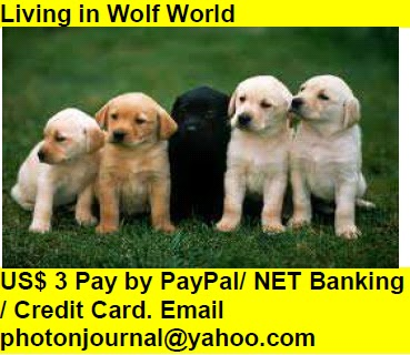 Living in Wolf World Book Store Buy Books Online Cash on Delivery Amazon Books eBay Book  Book Store Book Fair Book Exhibition Sell your Book Book Copyright Book Royalty Book ISBN Book Barcode How to Self Book