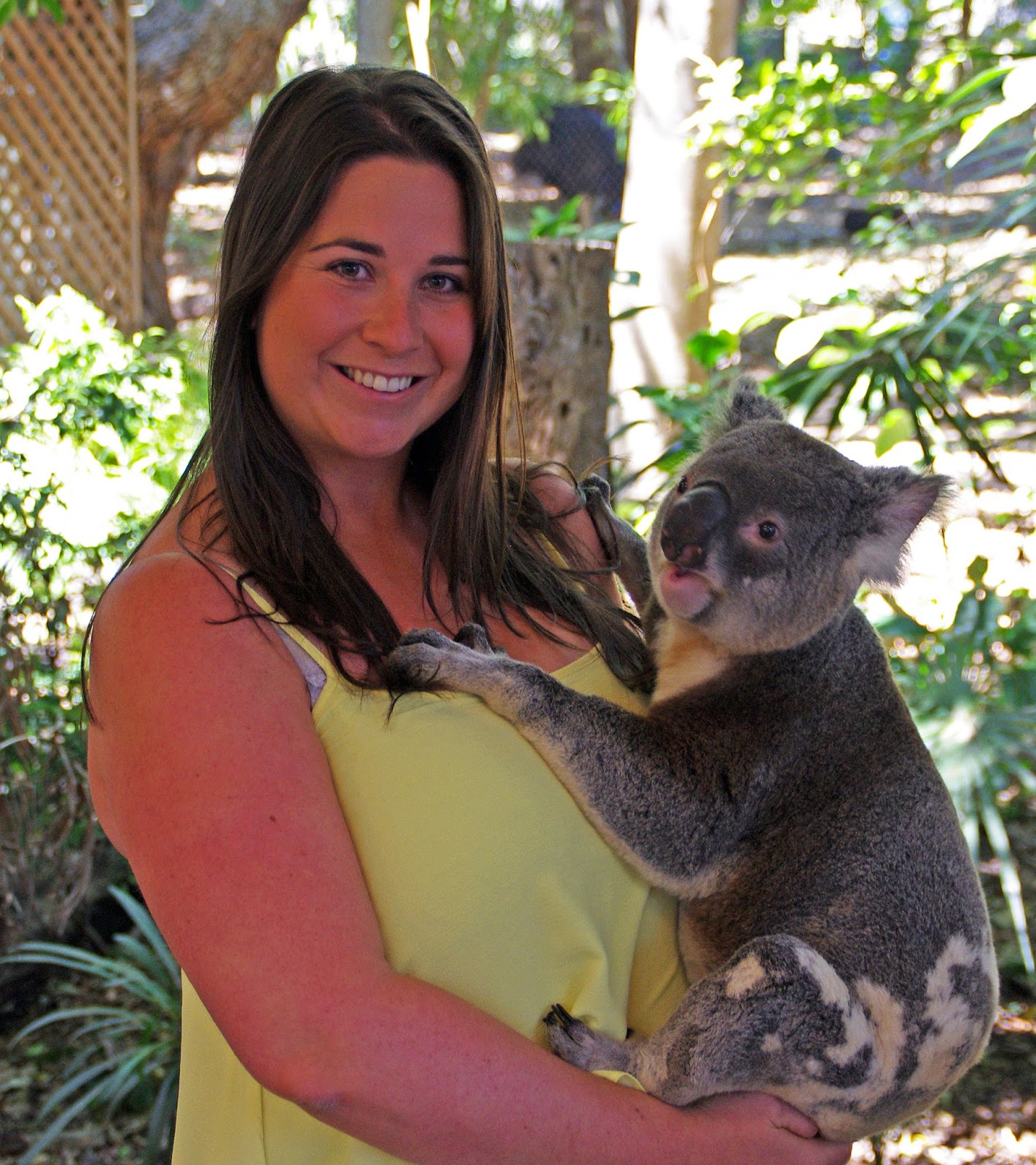 Aussie Flashpacker with Koala