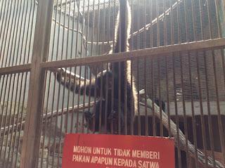 Wisata daerah Jakarta selatan-kebun binatang