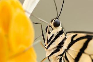 Un insecte: de la plante à l'assiette