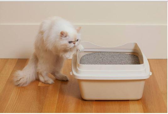 Melatih Kucing Buang Air Di Tempat yang Tepat