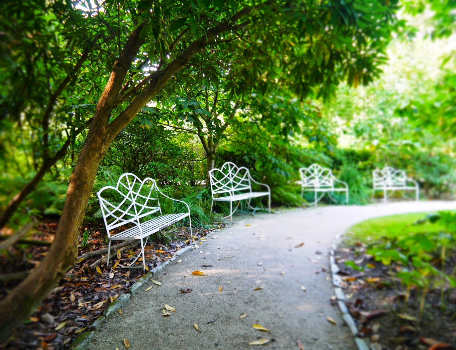 The Lost Gardens of Heligan, Cornwall - benches