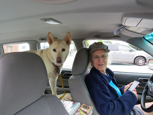 person and dog in car