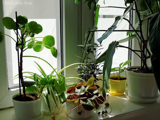 ochrona roślin przed słońcem