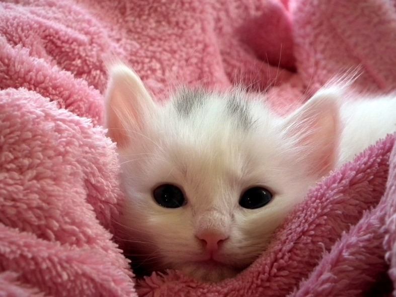 Reasons for Sensitive Skin That May Amaze You Delicate Kitten