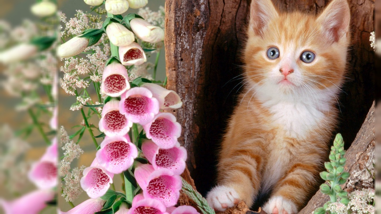 Cat Hd Wallpapers High Quality Background Free Cat Wallpapers The Incredible World Of Photos
