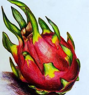 Dragonfruit sketch