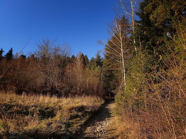 Za chwilę wejście do lasu