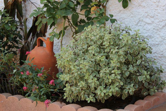 Un d a soleado de oto o plantas y flores de mi terraza - Arriate jardin ...