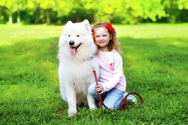 Najładniejsze psy