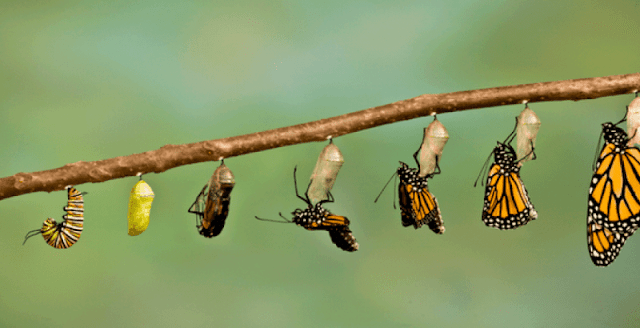 Pelajaran Dari Ulat Yang Bermetaformosis  Menjadi Kupu Pelajaran Dari Ulat Yang Bermetaformosis  Menjadi Kupu-Kupu