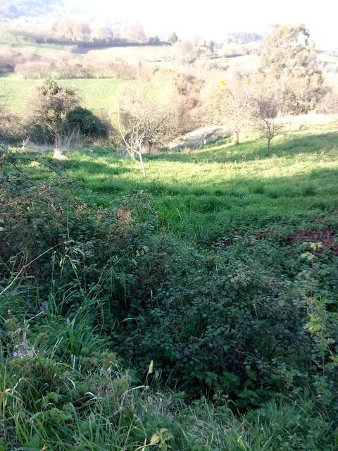 Arboles en zona soleada y zarzal en zona sombria