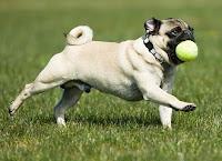 Top 10 Dog Breeds For Seniors