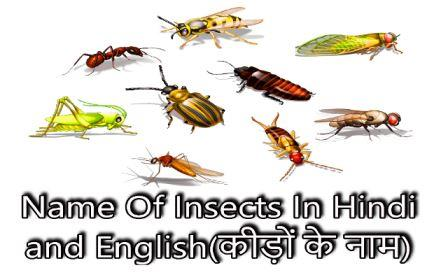 Name Of Insects In Hindi and English,insects pictures with names and information-कीड़ों के नाम हिन्‍दी और अंग्रेजी में