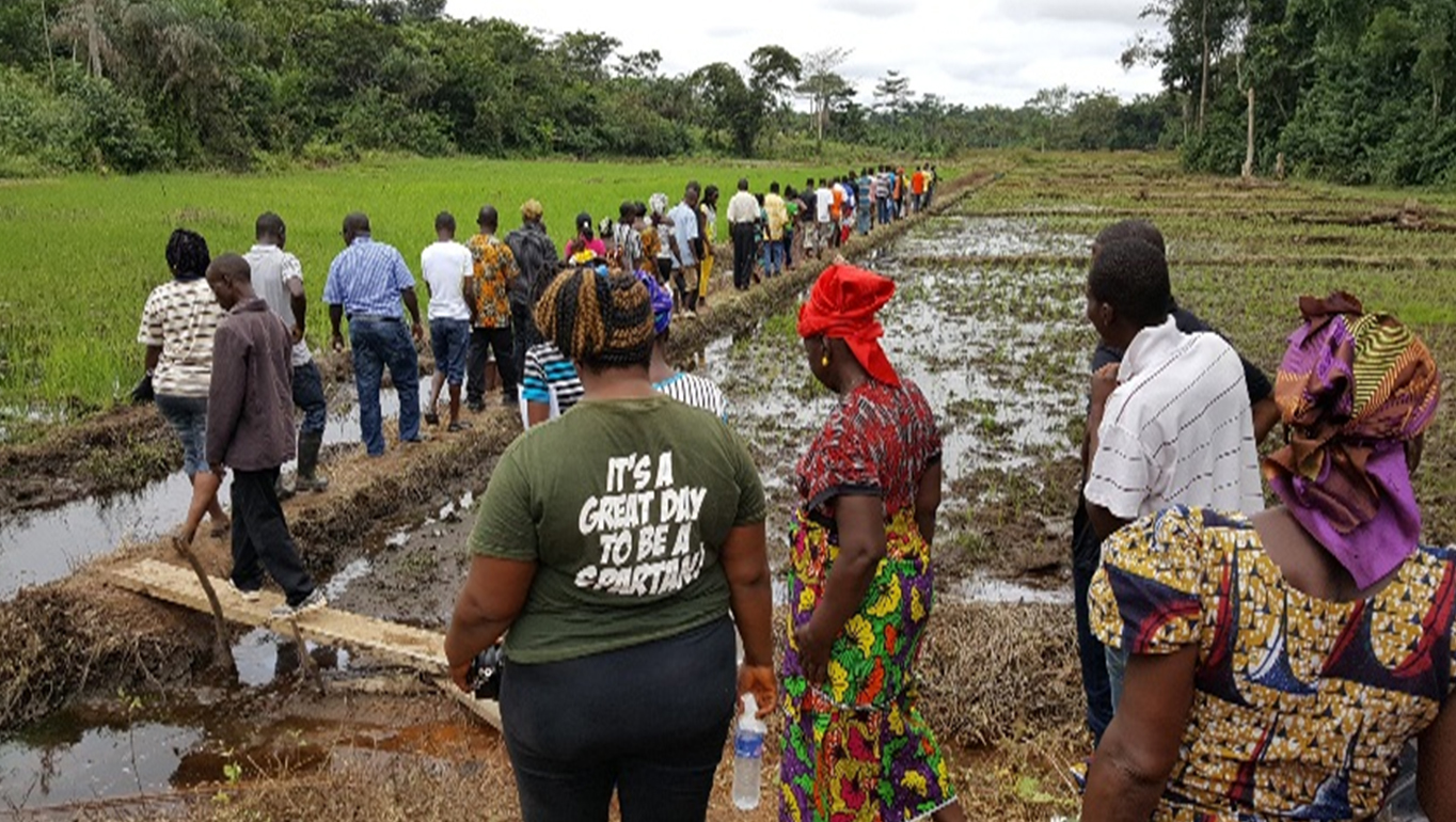 Image result for Rice Production Liberia