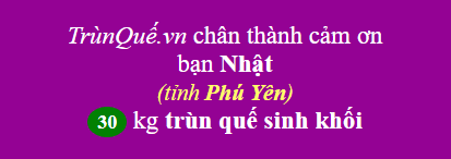 Trùn quế tỉnh Phú Yên