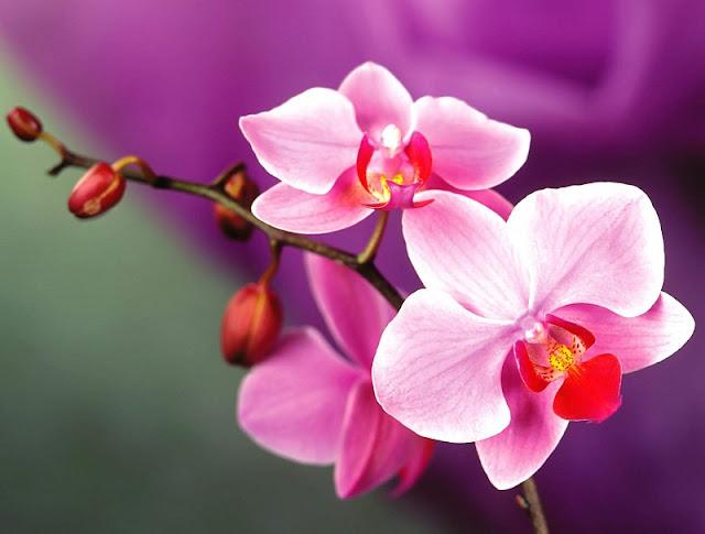 bó hoa đẹp tặng người yêu
