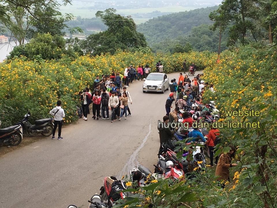 Cuối tuần, từ Hà Nội, người nườm nượp đổ về Ba Vì săn hoa dã quỳ
