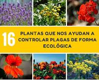 16 plantas que nos ayudan a controlar plagas de forma ecológica