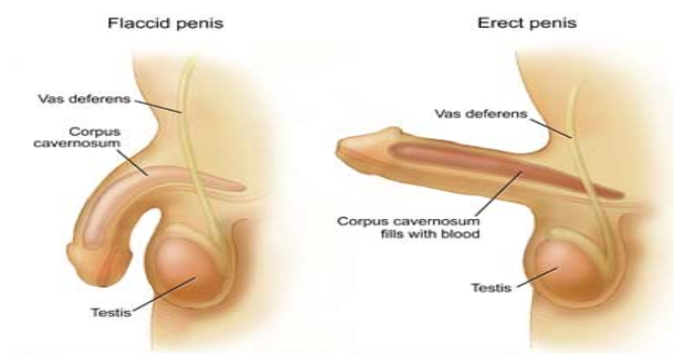 Natural Remedies To Straighten Penis